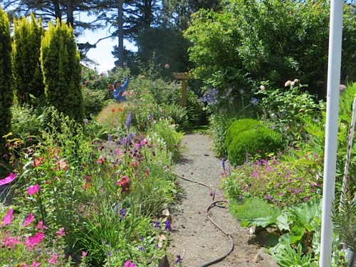 the straight path (made for easy wheelbarrow access) in the fenced garden