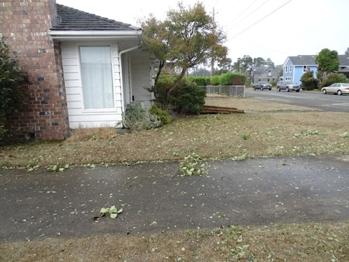 Nora's lawn strewn with leaves