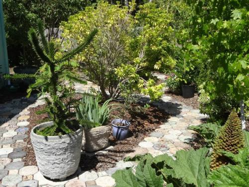 Those paver paths were just as weed-free when Allan and I recently pre-toured this garden.
