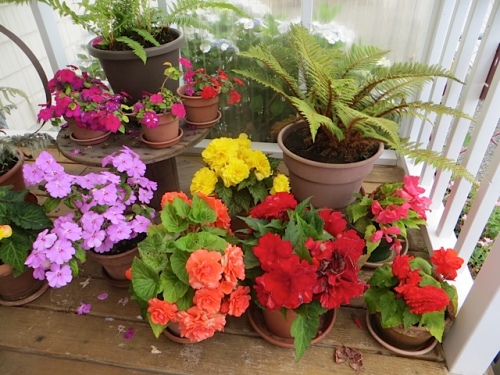 potted plants on the deck
