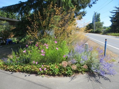 Diane's garden along the highway, with Stipa gigantea