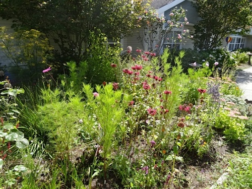 NE quadrant of Golden Sands courtyard with cosmos and monarda (bee balm)