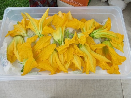 squash blossoms from Pink Poppy Farm