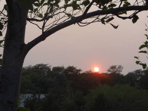 glowing sunset over the trees