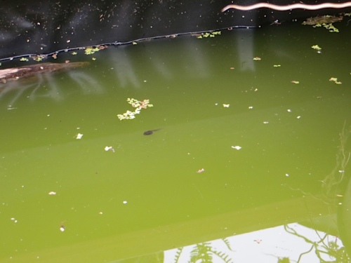The tadpoles in the water box are refusing to turn into frogs.