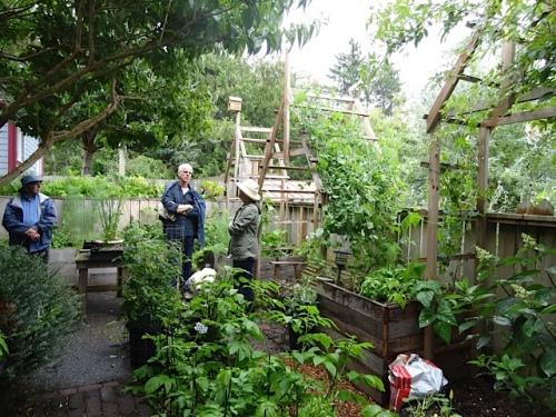 Pam's back garden