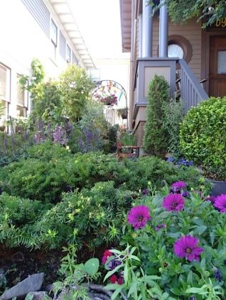 a charming garden three doors uphill