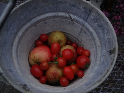 picked some apples and tomatoes...