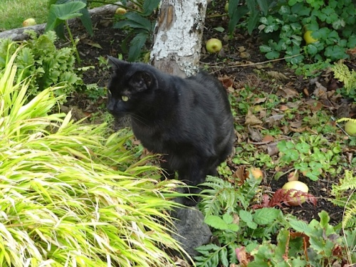 in Allan's garden about to nibble some grass