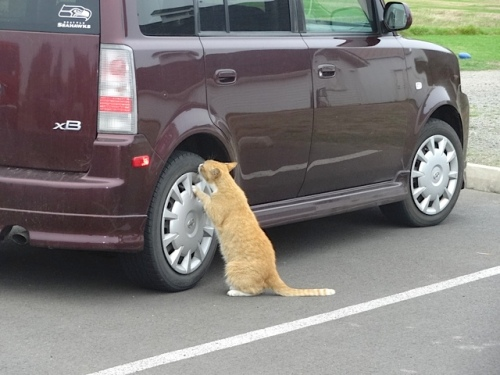 Parking Lot Cat was deeply interested in this tire.
