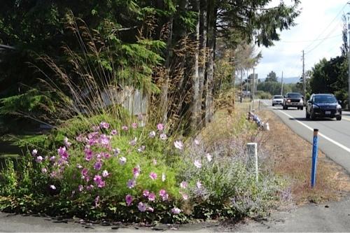 Diane and Larry's roadside garden