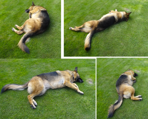 All these photos were taken from the same angle. She likes to whirl on the lawn.
