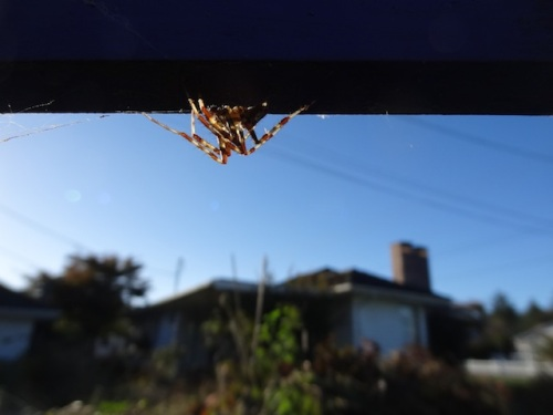 The spiders are enjoying the new arbour.