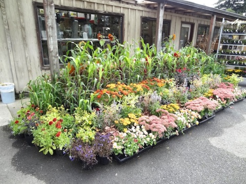 We stopped at The Planter Box on our way north to pick up a few plants for a container at the Anchorage.