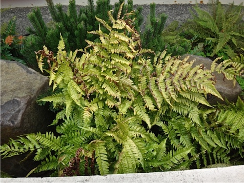 a fern by the entrance