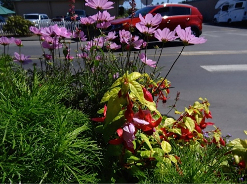 Allan's photo of a planter in the north blocks