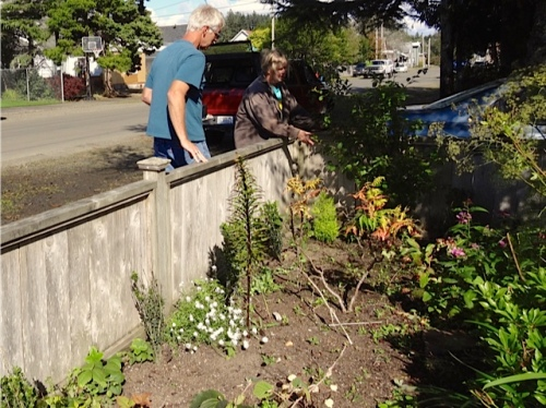 more plant talk over the front fence (Allan's photo)