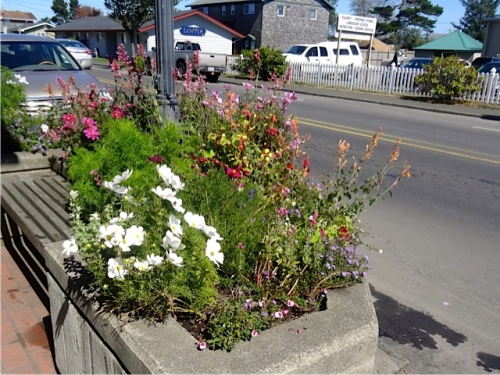 Allan watered the street trees and the two north blocks today and photographed my favourite planter by Dennis Co.