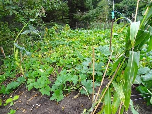 veg garden (Allan's photo)