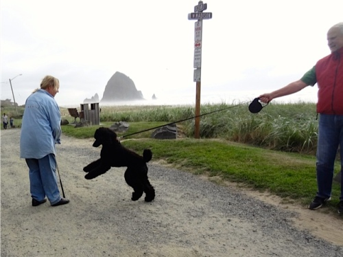 I meet a poodle (Allan's photo)