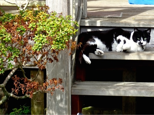 Allan's photo: a cute cat near the post office
