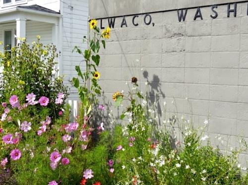 Allan's photo: our post office garden
