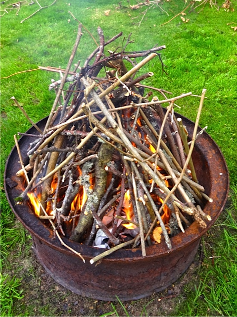 The dead salmonberry, cut into twigs, made good kindling.