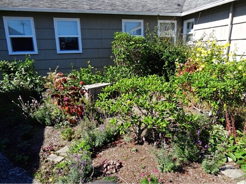 before (Allan's photo): the target was the flowering quince in the corner.