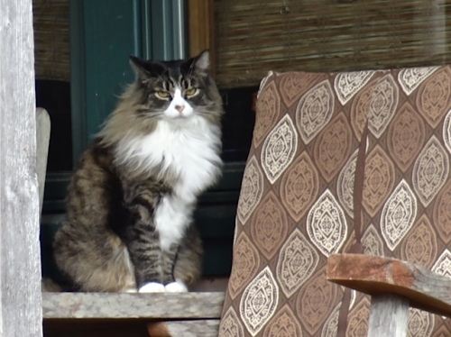 one of their cats on the porch (Allan's photo)