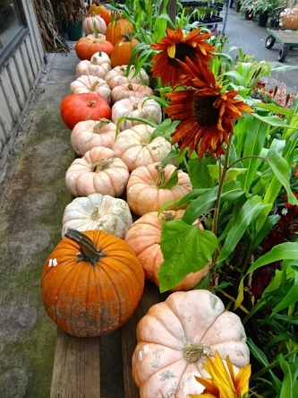Allan's photo: They have pumpkins!