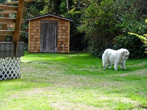 Bella in the A Frame garden