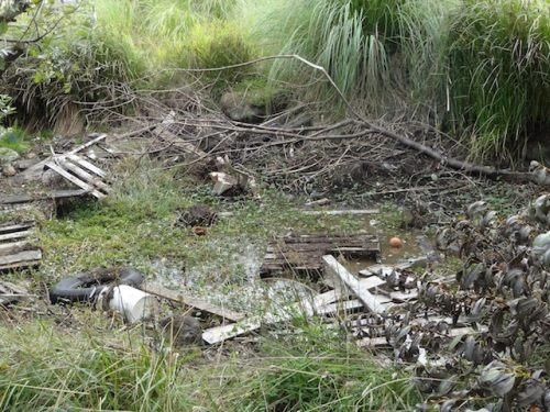 I wish the kids that had made that fort would clean up the debris before the pond fills up again.