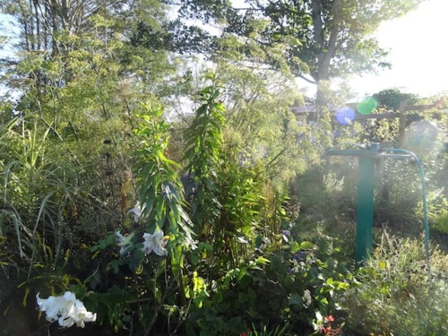 Here's the view WITH the fennel on Sept. 7th.