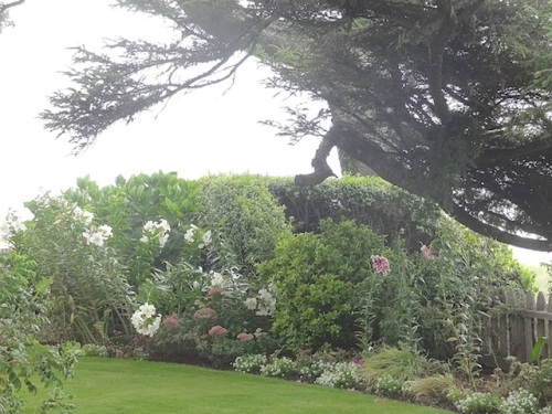 a windswept beachfront garden