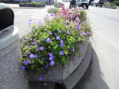 same planter on the side not facing oncoming traffic