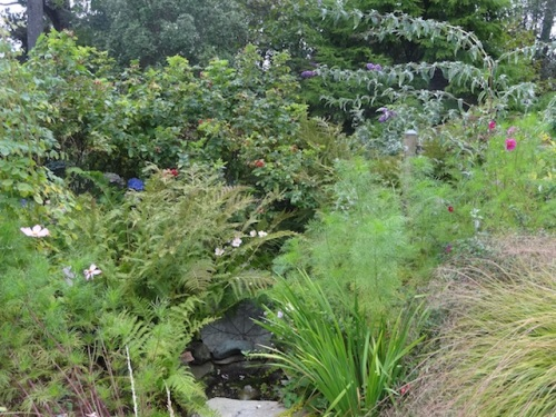 Last week: the ferns looked all tatty and were hiding the bubbler, and got cut down.