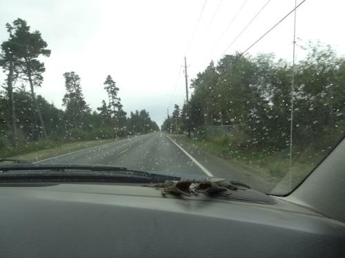 A good rain fell overnight.