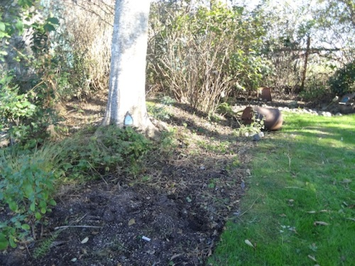 main path to the bogsy woods with the side bed weeded and blackberry tangle removed