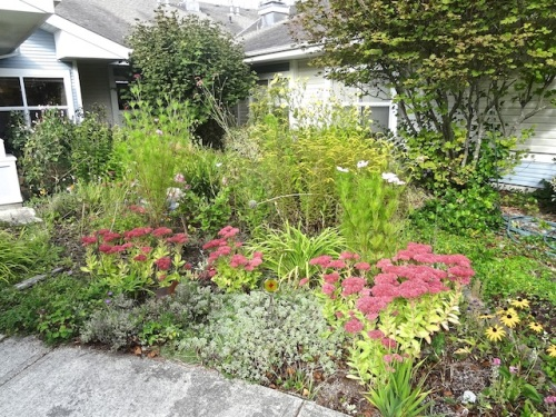 NE quadrant. Note to self: Divide the Solidago 'Fireworks' and put some in the three other quadrants.