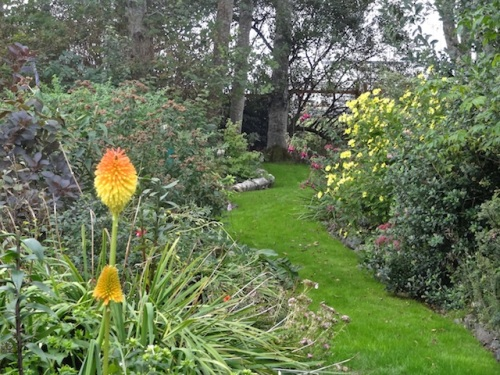 looking south on the west path (Kniphofia 'Earliest of All')