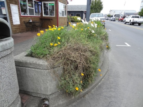 This planter by The Hungry Harbor (before) was the shabbiest looking.