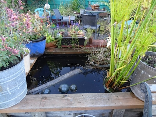 delightful full water boxes