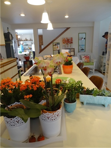 kitchen counter with plant collection