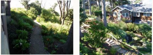 the garden in 2007