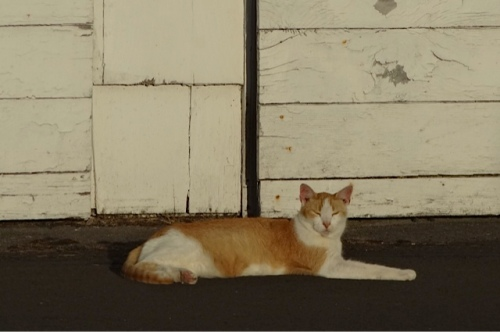 When we arrived, our friend Parking Lot Cat was looking especially regal by the garage.