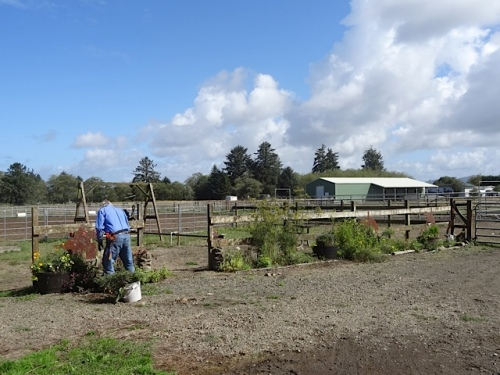 Allan tidying up the Red Barn garden, which had held up better than we had expected