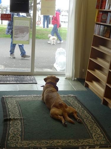 Scout watched the door.