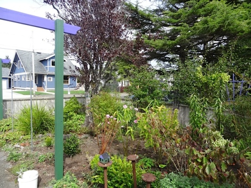 But then I remembered where I had really meant to put Tasman! In the east corner of the front garden....