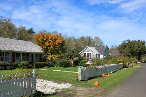the pumpkins of Oysterville in autumn of 2013, photo by Tom Hornbuckle