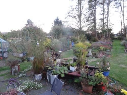 the garden at dusk